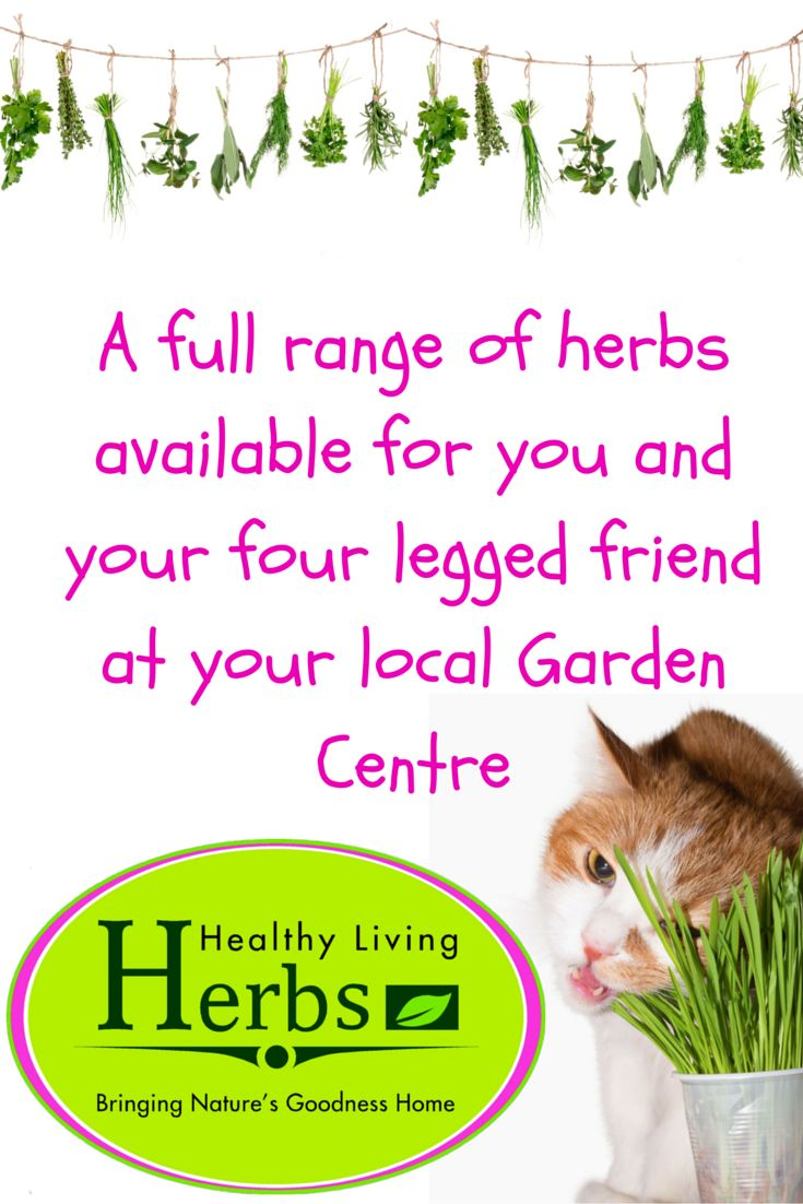A full range of herbs available for you and your four legged friend at your local Garden Centre