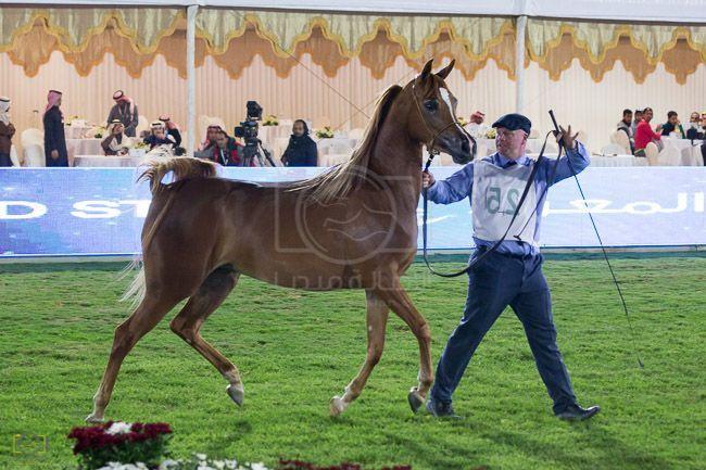 إعلان عن إقامة دورات تدريبية مختصة في جمال الخيل العربية بمركز الملك عبد العزيز Arabian Horse Horses Animals