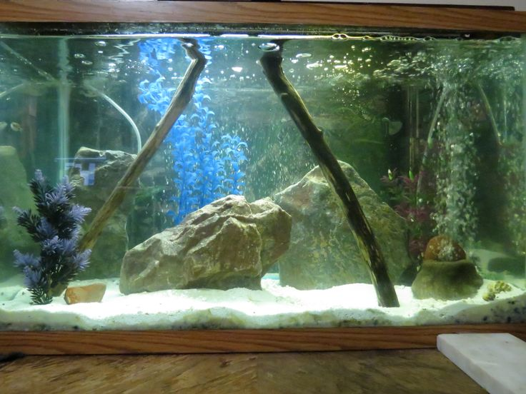 30 Gallon Brackish Figure 8 Puffer Aquarium Fish Tank