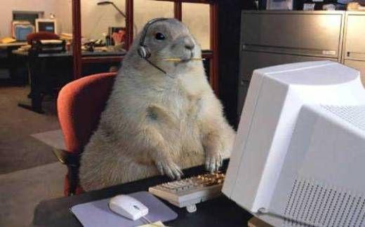 funny animal computer operator
