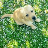 You may get allergies out in the garden but did you know your furry friend could as well?
