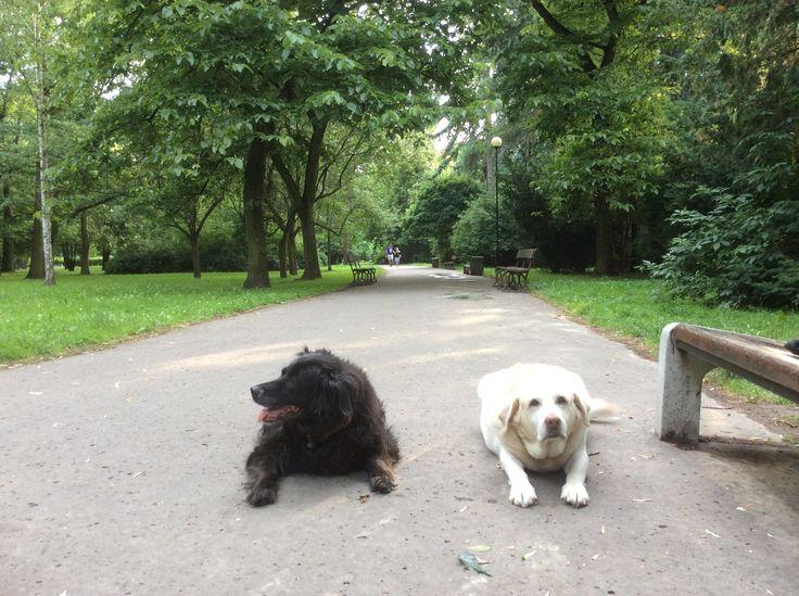 W parku naszym