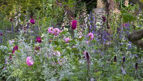 Fem smukke bede fra Chelsea Flower Show | Haveselskabet