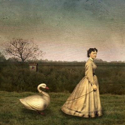 """""""Swan on a Leash"""" by Maggie Taylor"""