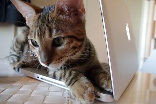 C as in cat, C as in camera, C as in chocolate: お次はMac OS X Toygerで