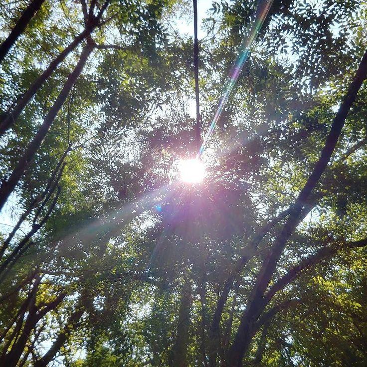 #sun #sunside #trees #green #yellow #thessaloniki #instathess #instathessaloniki #gregfrag #instago #summer
