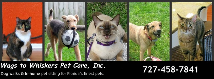Wags to Whiskers Pet Care is a professional pet care company, serving Belleair, Belleair Beach, Belleair Bluffs, Belleair Shore, Largo west and north and Indian Rocks Beach. We provide in your home pet sitting and dog walking, as well as overnight pet sitting in your home. Our current service area includes the following zip codes: 33770, 33774, 33778, 33785, 33786, 33756.
