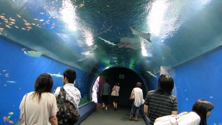 Sep 2012 - Osaka Aquarium Kaiyukan