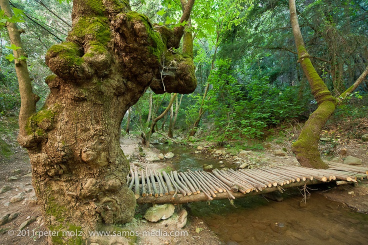 Primitive footbridge over a brook in the Potami Valley in the east Aegean island of Samos, Greece