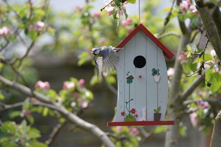 Ptačí budky jsou dobrodiním pro ptáky i zahradu. Ptačí rodiče nosí mláďatům neúnavně tisíce mšic a housenek. Oberou hmyz pečlivě z květin i stromů a ještě vám vesele zazpívají.