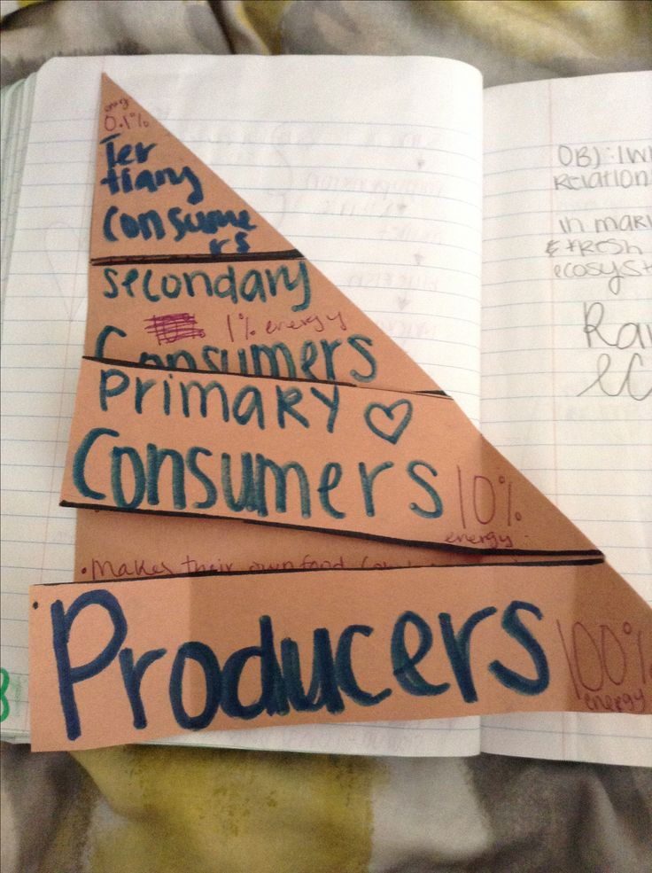 Foldable on the tropic levels. 8th Grade Science Interactive Notebook.