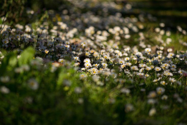 Photograph springtime light in Buyucada by Ana-Cristina Dinu on 500px