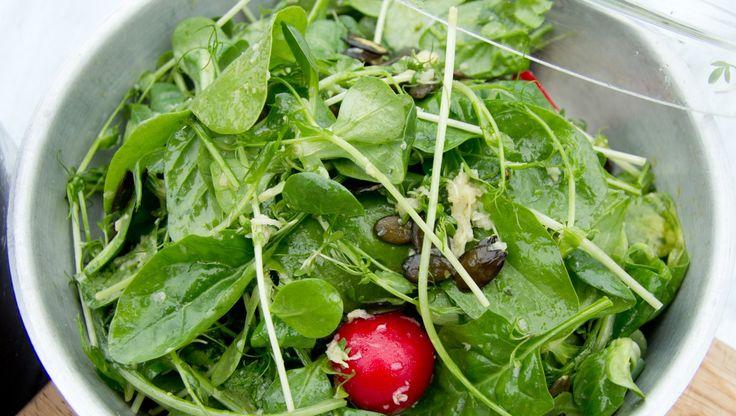 Salat med små salatblader, reddiker og revet pepperrot