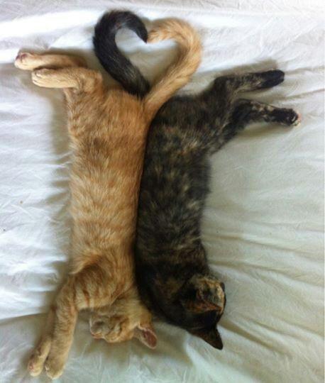 L o v e heart-shaped kitten tails