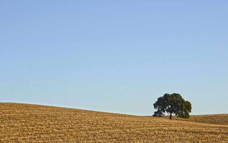 Tree in the golden fields by Cristina Palma Moreira on 500px