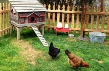 Une poule : LA solution pour réduire ses déchets ?