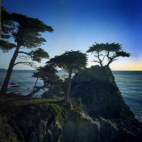 Along the 17 mile drive in Monterey California. Pebble Beach Golf Course is to the left. Taken in November of 2000 with a Hasselblad and 50mm lens. #Cali #17mileDrive #FrankHardyPhotography #California #LoneTree #Monterey #PebbleBeach #Instagram #500px #NorthernCalifornia #US1 #montereylocals #pebblebeachlocals - posted by Frank Hardy Photography https://www.instagram.com/frankphardy - See more of Pebble Beach at http://pebblebeachlocals.com/