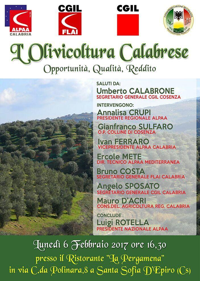 L'olivicoltura Calabrese