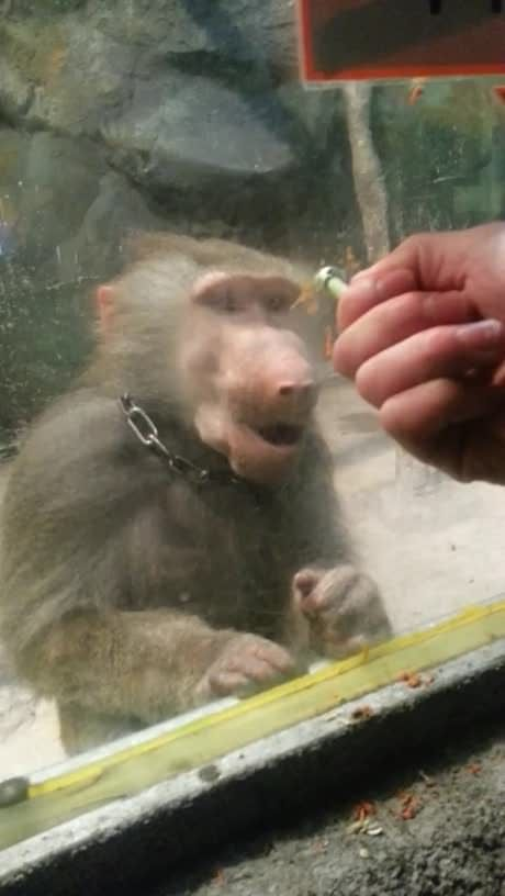 How to make a monkey go nuts
