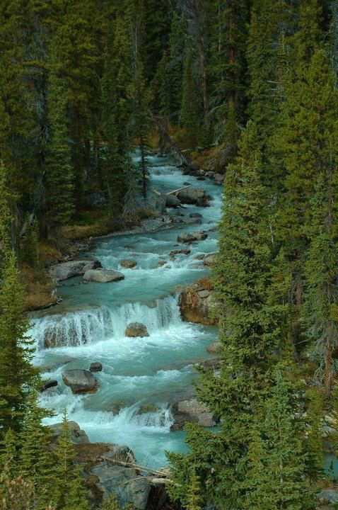 Jasper National Park, Alberta, Canada. Wilderness Campsites.