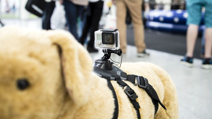 The latest GoPro accessory lets you attach a camera to Fido.
