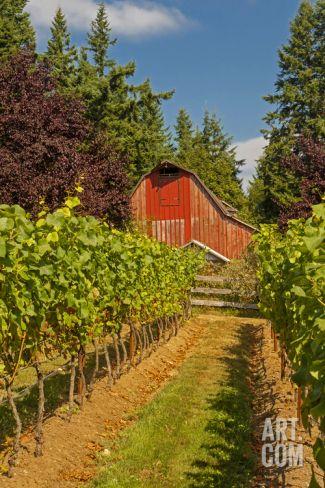 Winery and Vineyard on Whidbey Island, Washington, USA Photographic Print by Richard Duval at Art.com