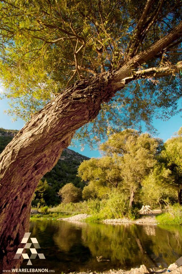 The beautiful nature in the North الطبيعة الرائعة في الشمال By Khaled Merheb #WeAreLebanon #Lebanon
