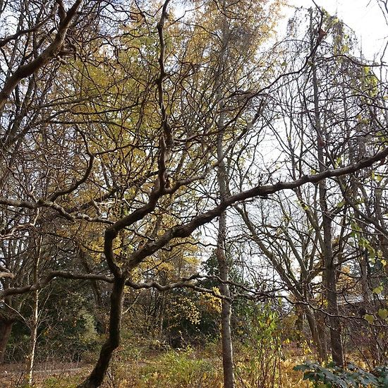 winter trees in a garden.