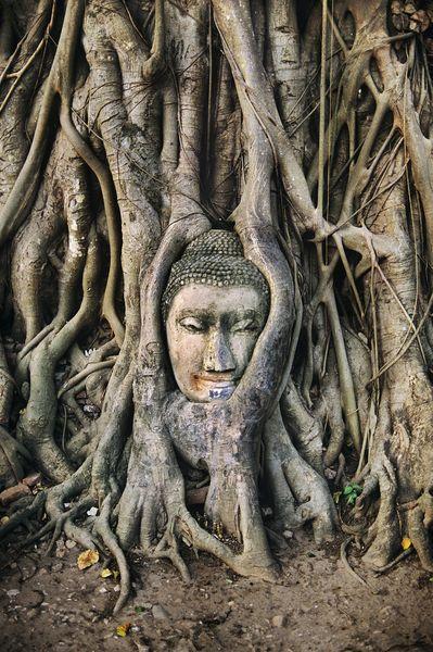 Ayutthaya, Thailand  by Steve McCurry