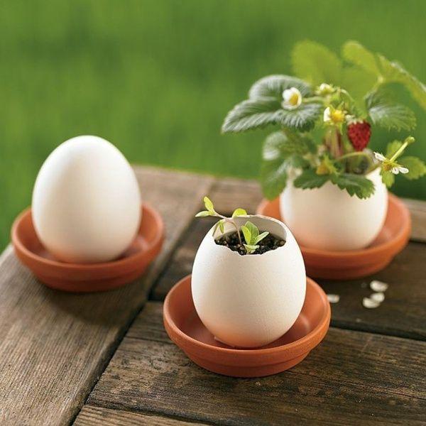 ehrfurchtiges deko ideen zu ostern niedliche haeschen und bunte eier auflisten bild oder cabababaacfdac petunia plant egg shells