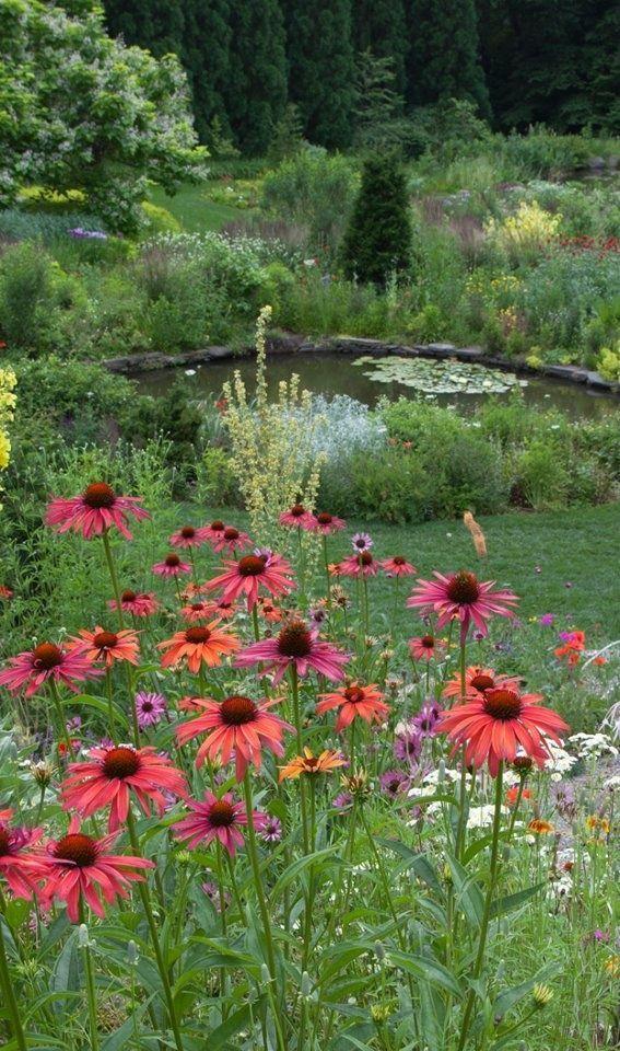 735 best perennials images on pinterest flowers garden for Flower garden ponds