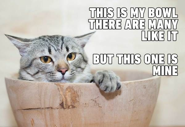30 Cat Memes Will Make Your Day Better May 2020 Updated Funny Cat Memes Funny Grumpy Cat Memes Cat Quotes Funny