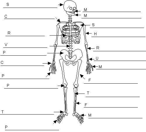 « Oscar », Squelette de fond de classe à Humain 3d et demain… |