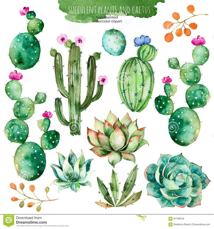 Set Of High Quality Hand Painted Watercolor Elements For Your Design With Succulent Plants,cactus And More. - Download From Over 59 Million High Quality Stock Photos, Images, Vectors. Sign up for FREE today. Image: 67798518