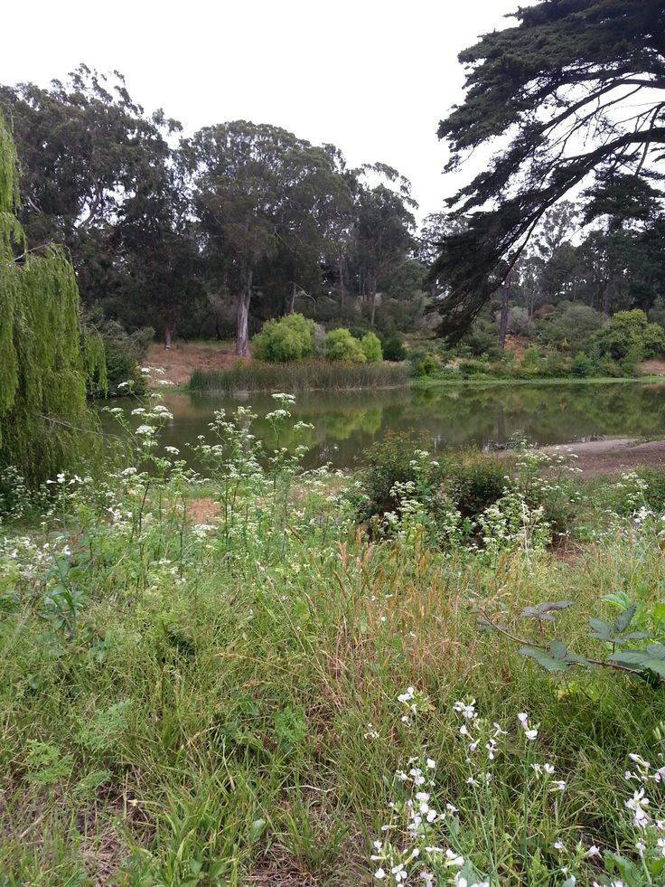 1000 Images About San Francisco Botanical Gardens