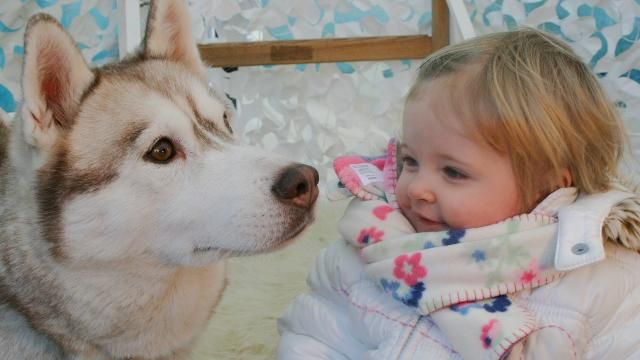 Children can enjoy donkey and husky sleigh rides and a visit to Santa's grotto this December.