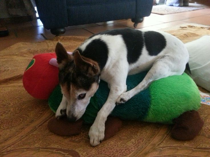 Lily and the very hungry caterpillar
