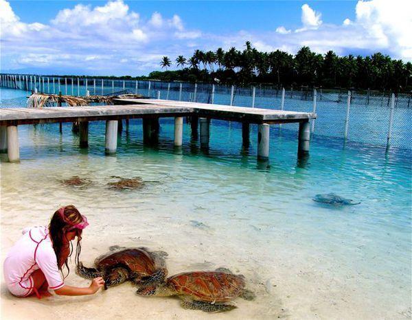 87 best images about Bora-Bora on Pinterest   Bora bora ...