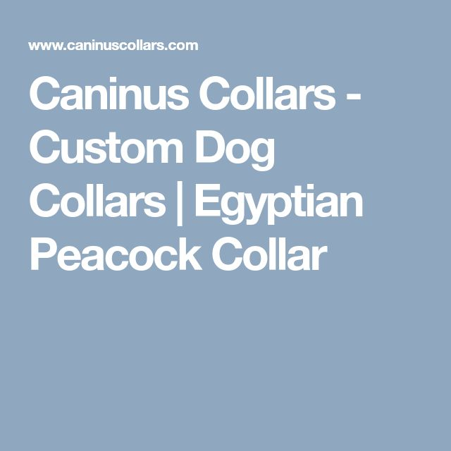 Caninus Collars - Custom Dog Collars | Egyptian Peacock Collar