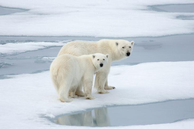 10 sorprendentes consecuencias del calentamiento global