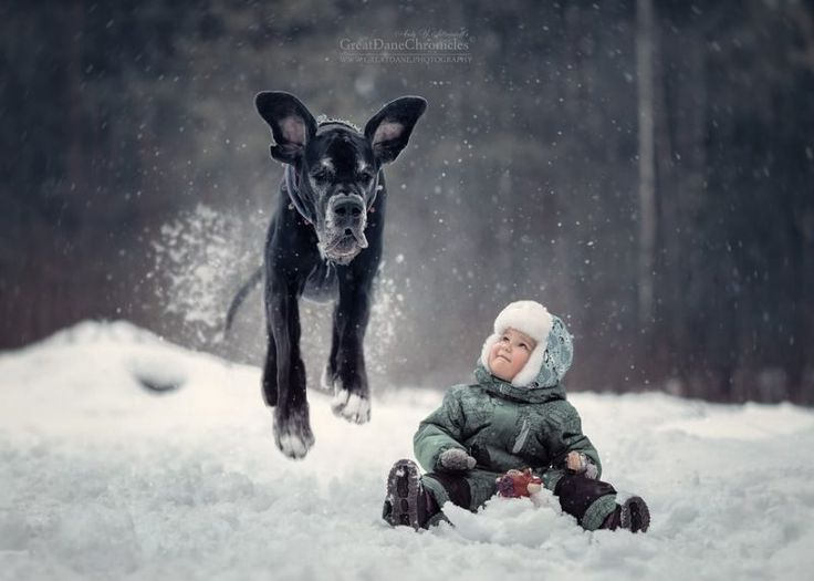 Best Photography Andy Seliverstoff Images On Pinterest - Tiny children and their huge dogs photographed in adorable portraits by andy seliverstoff