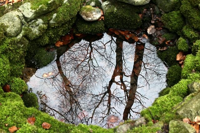 Easy Ways to Reach a Garden Landscaping Success