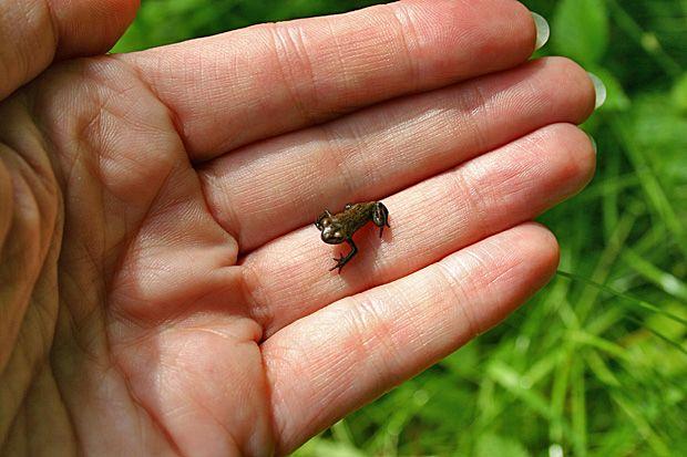 Unsere Natur im Juli Sommerwiesen Frsche Glhwrmer  Kuriose Tierwelt  Blog Kuriose