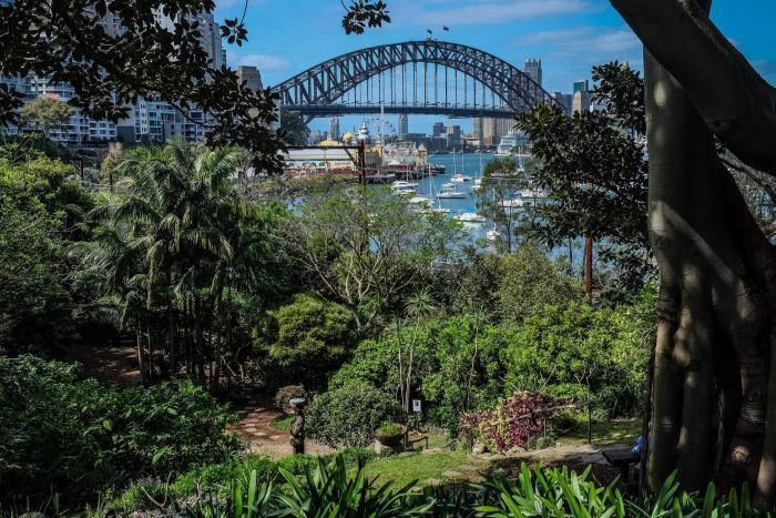 Wendy Whiteley's garden - The future of a much loved garden sanctuary on the shores of Sydney Harbour has been secured after the New South Wales Government agreed to hand over the land on a 30-year renewable lease.