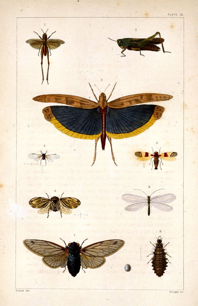 ::: Wild Animal, Vintage Plates, Plates Posters, Vintage Science, Science Plates, Master Bath, Insects Prints, 11X17 Vintage, Vintage Insects