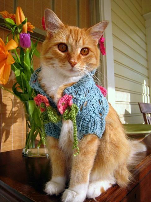 Cat in blue sweater with crochet floral designs, craft ideas for making pets clothing