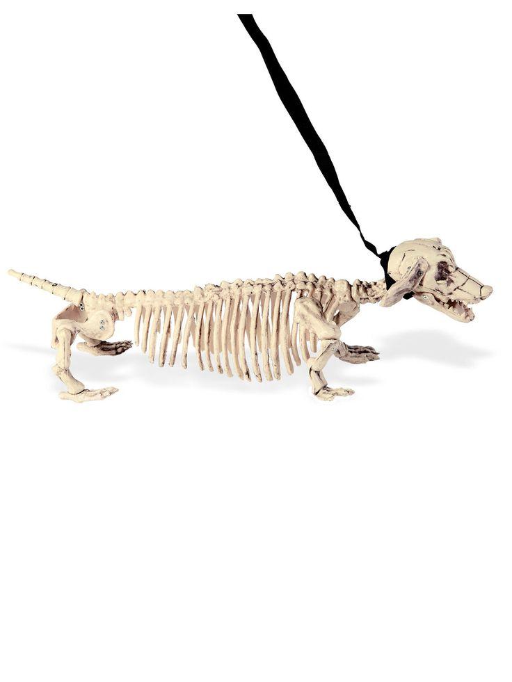 Les 25 meilleures id es de la cat gorie squelette chien - Dessiner un squelette ...