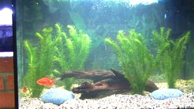 14 best images about fish on pinterest households for How to clean a fish tank
