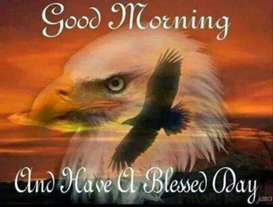 Good Morning America Eagles : Images about native on pinterest american