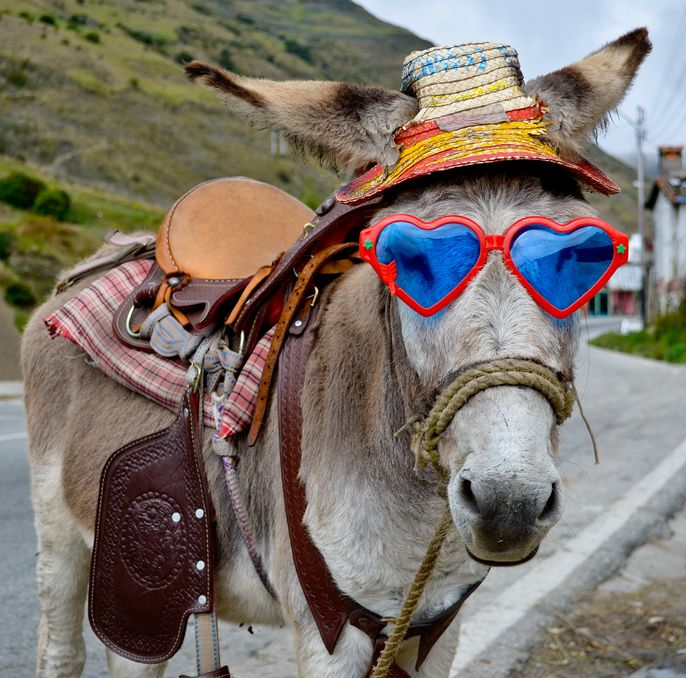 23 Best Images About Silly Hat Things On Pinterest: 11 Best Images About Donkey On Pinterest